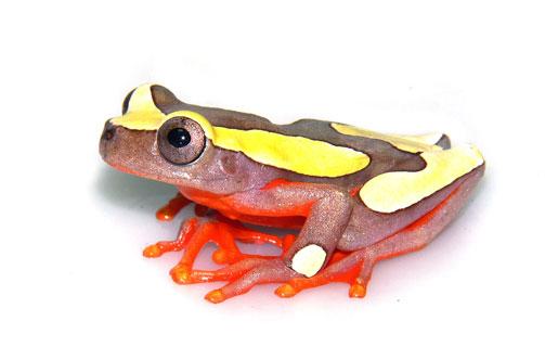 Amphibienmedizin