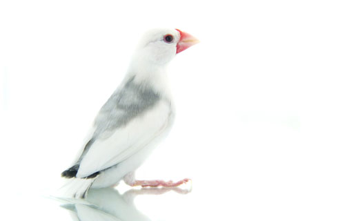 Vogelmedizin
