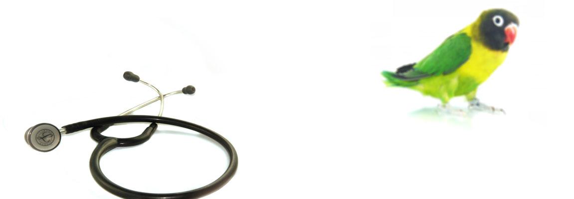 Gesundheit von Exoten